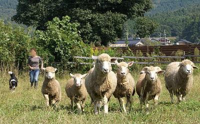 1004-23羊追8