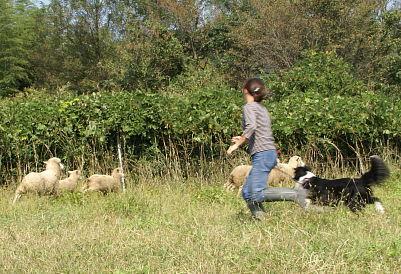 1004-29羊追14