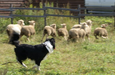 1004-22羊追7