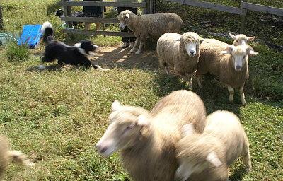 1004-19羊追4