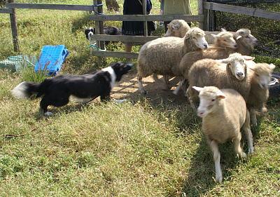 1004-21羊追6