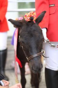 miniture_pony
