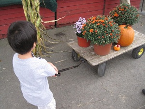 かぼちゃ4