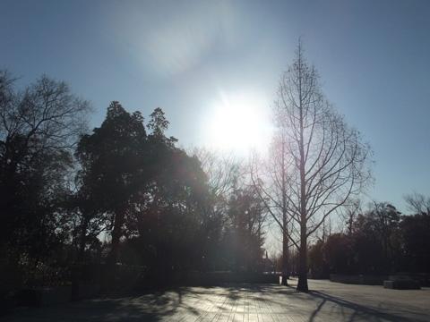 春を待つ公園①