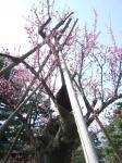 kanazawa090320_1116.jpg
