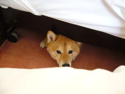 宿のベッドの下に潜り込む俺ちゃん