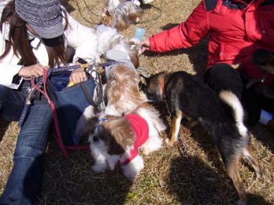 小型犬と柴