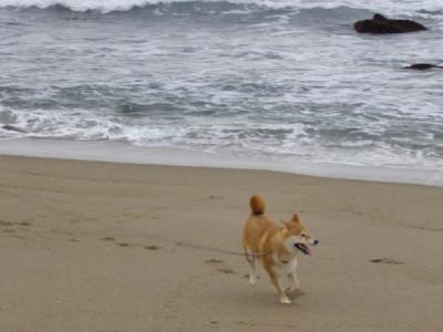 波と追いかけっこ