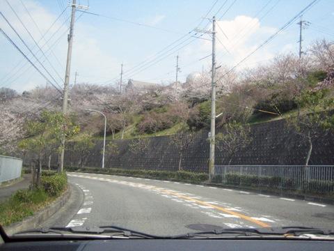 IMG_4575sakura.jpg