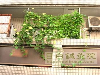 緑のカーテン20119月の様子