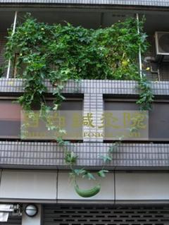 20111017緑のカーテン