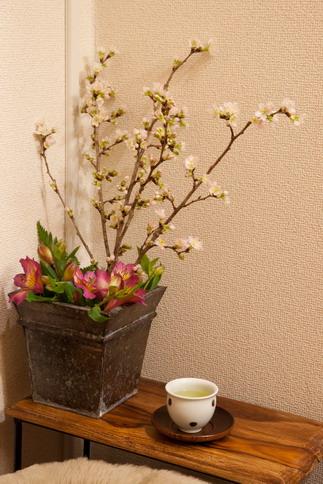 2012桜開花!