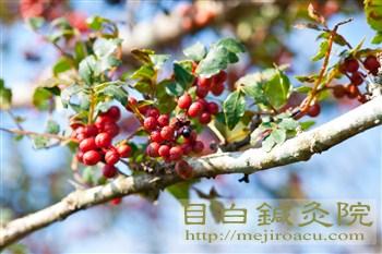 20111009細野高原7