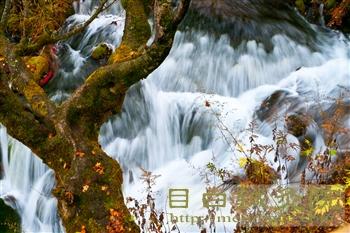 2011年10月九寨溝の紅葉と渓流2