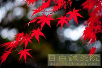 20111214代々木公園紅葉4