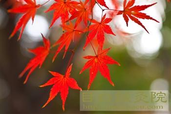 20111214代々木公園紅葉3