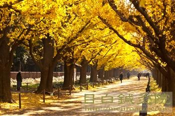 20111214代々木公園紅葉6