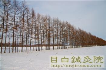 帯広鍼灸研修2012冬(3日目)1