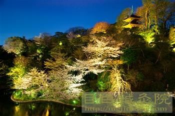 20120405夜桜見物1