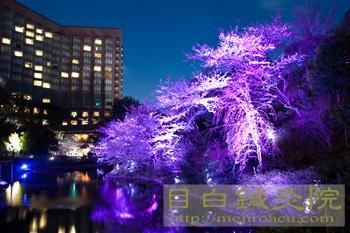 20120405夜桜見物2