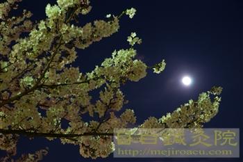 20120405夜桜見物3