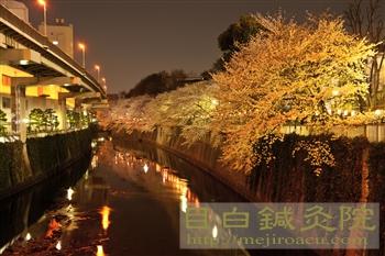20120405夜桜見物4