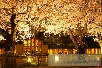 20120406自由学園夜桜3