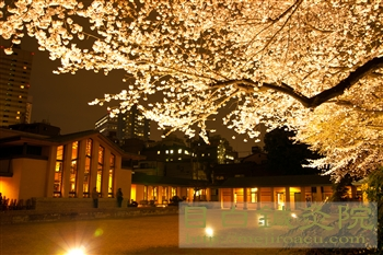 20120406自由学園夜桜1