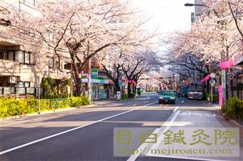20120407桜1