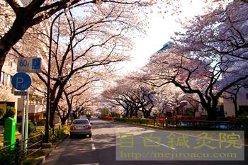20120407桜2