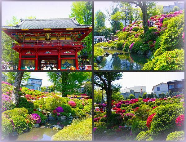 根津神社 つつじ祭り
