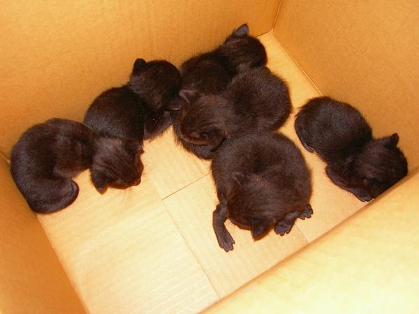 黒猫ちゃんたち