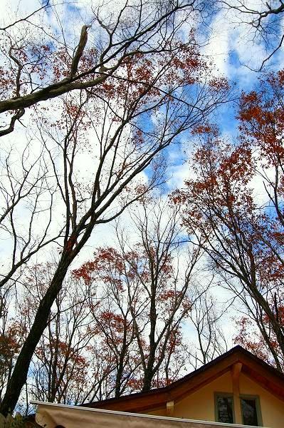カシュカシュの森