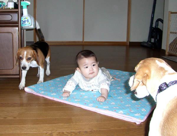 2006_0402taratoromimi0074-6.jpg