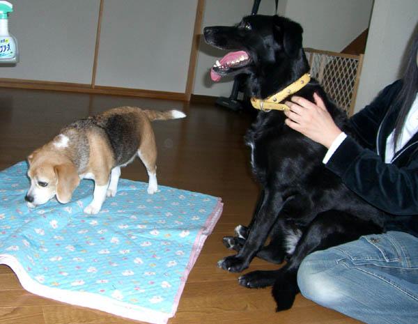 2006_0402taratoromimi0085-6.jpg