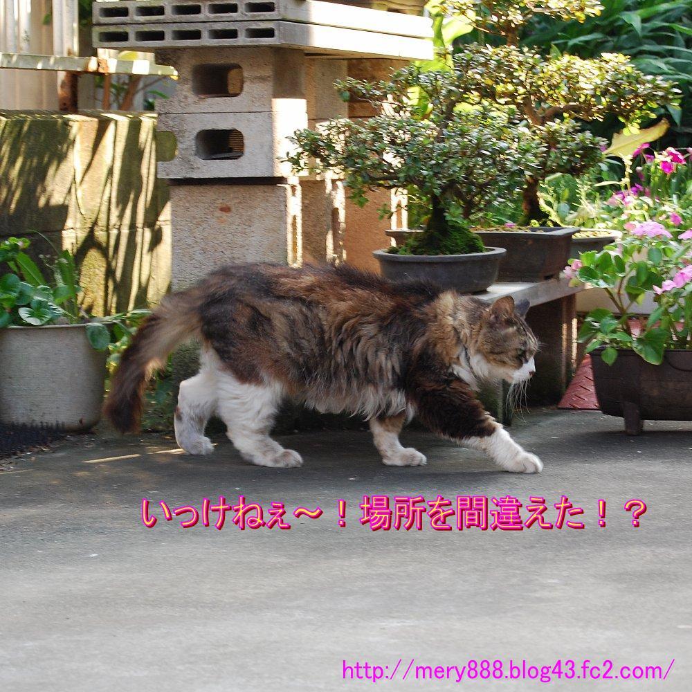 ねてるメリー2008_09_13_02
