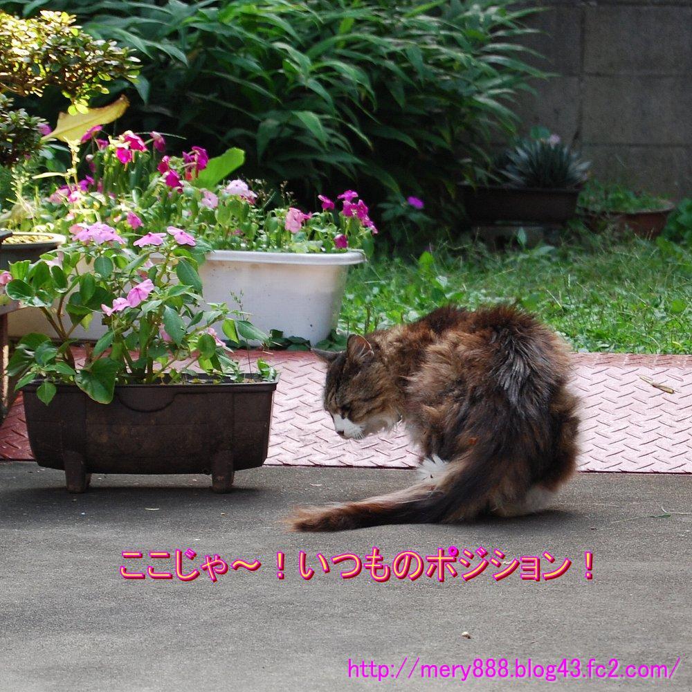 ねてるメリー2008_09_13_03