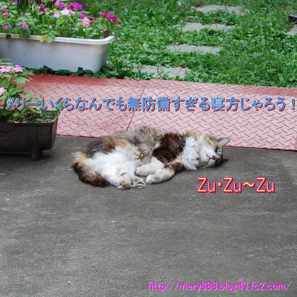 ねてるメリー2008_09_13_04