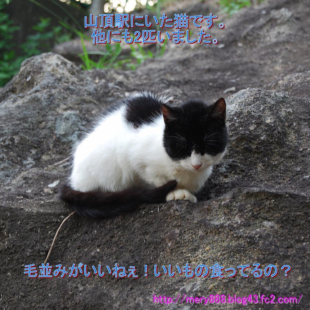 鋸山山頂駅の猫01