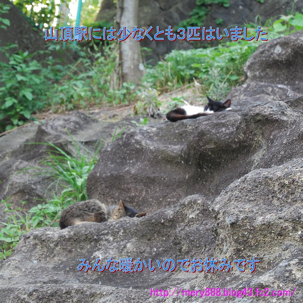 鋸山山頂駅の猫02