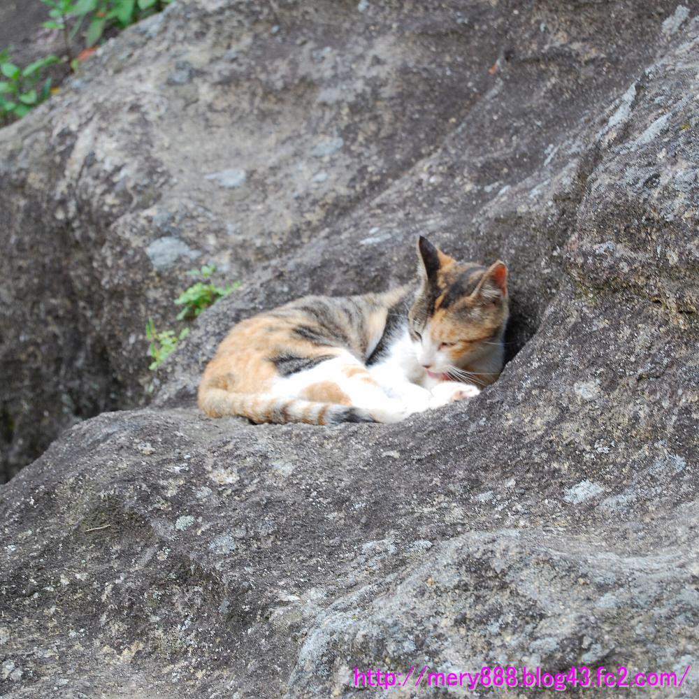 鋸山山頂駅の猫03