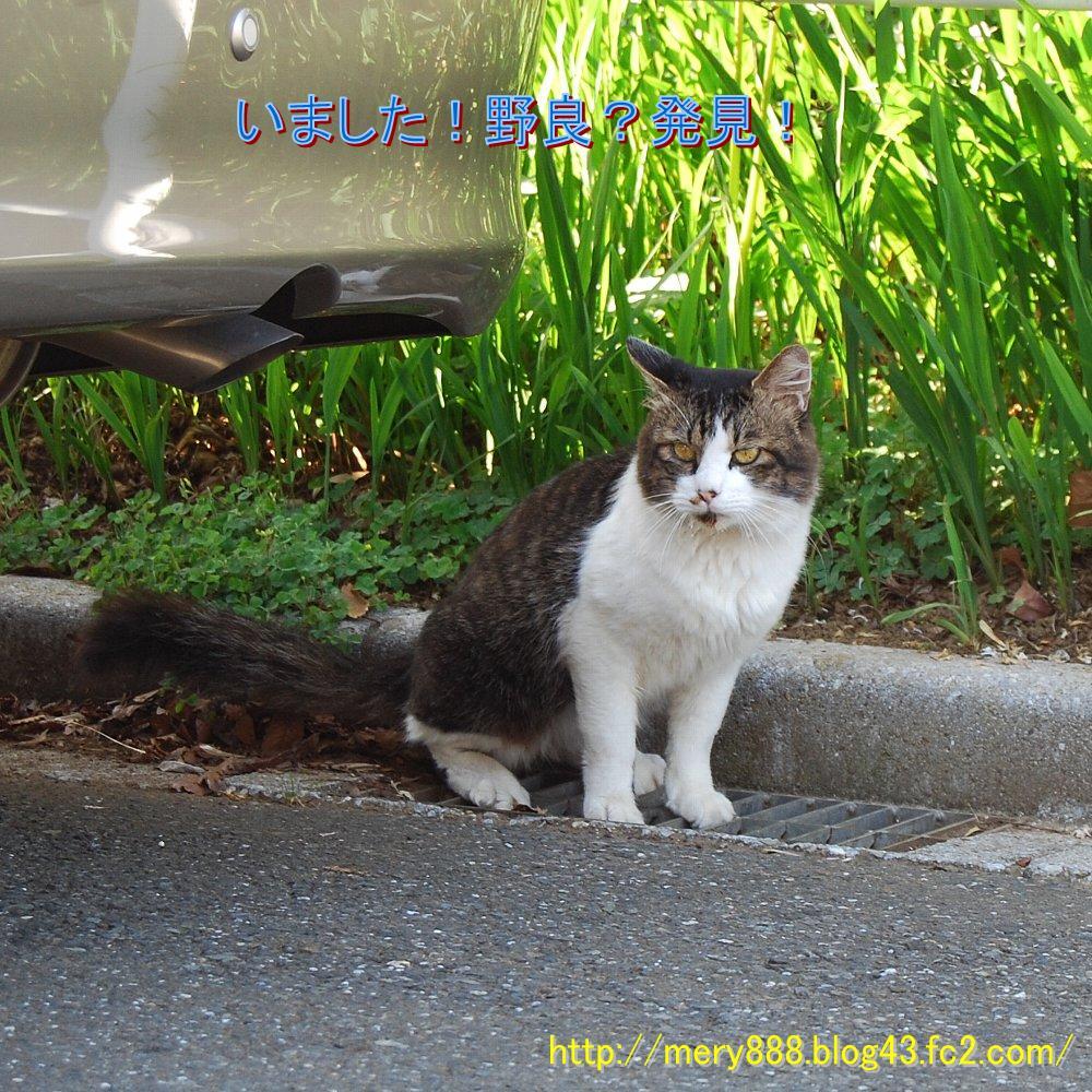 野良2008_10_04_01