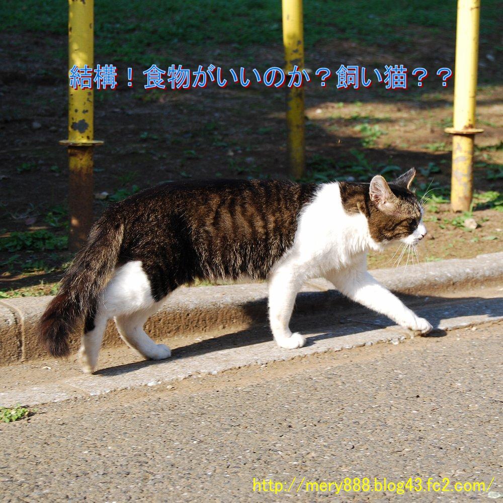 野良2008_10_04_02