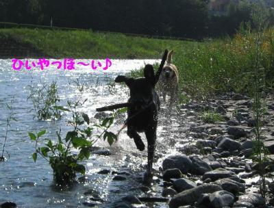 IMG_2349a.jpg