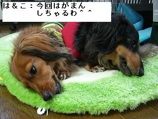 CIMG0129.jpg