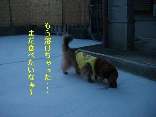 CIMG0133_20080813201639.jpg