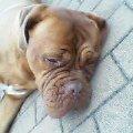 完全に寝てる犬