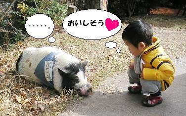 豚を見て思う。