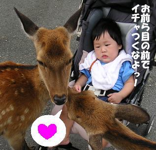 鹿と息子。