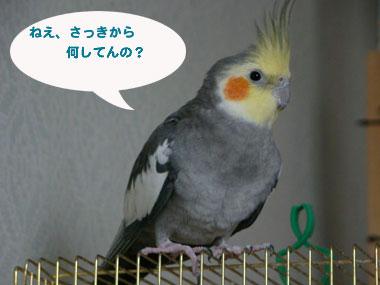 201003071.jpg